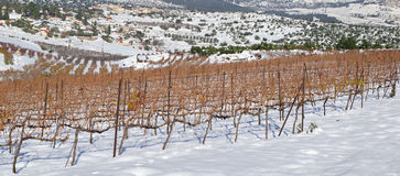 Vineyards covered with snow. Winter in Israel Royalty Free Stock Images