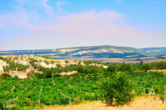 The vineyards of Crimea Stock Photo