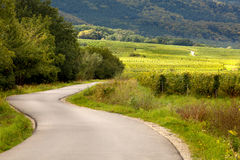 Vineyards and curving road. Summer view on curving road through the French vineyards of the Alsace region near Andlau stock photo