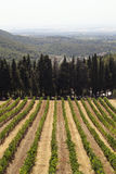 Vineyards and cypress stock photography