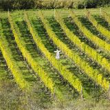 Vineyards, Czech Republic Stock Photos