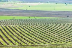 Vineyards, Czech Republic Stock Photos