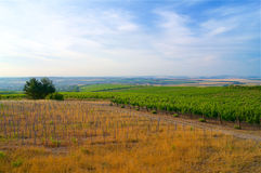 Vineyards in the Czech Republic South Moravia Stock Photography