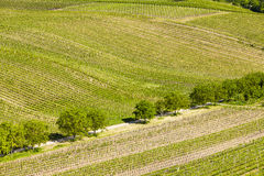 Vineyards, Czech Republic Royalty Free Stock Images