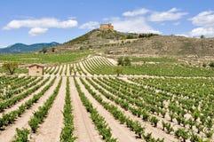 Vineyards and Davalillo castle, La Rioja (Spain) Stock Image