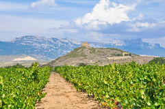 Vineyards and Davalillo castle, La Rioja, Spain Royalty Free Stock Image