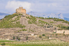 Vineyards and Davalillo castle, La Rioja, Spain Royalty Free Stock Images