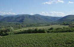 The vineyards of Demir Kapija, Macedonia. The beautiful vineyards of Demir Kapija located in Macedonia Stock Photo