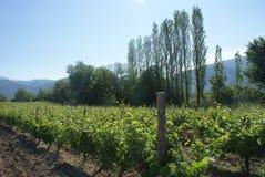 The vineyards of Demir Kapija, Macedonia. The beautiful vineyards of Demir Kapija located in Macedonia Royalty Free Stock Images