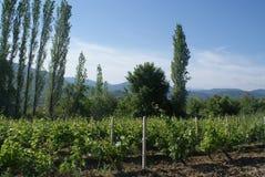 The vineyards of Demir Kapija, Macedonia. The beautiful vineyards of Demir Kapija located in Macedonia Stock Image