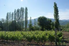 The vineyards of Demir Kapija, Macedonia. The beautiful vineyards of Demir Kapija located in Macedonia Stock Photography