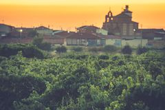 The vineyards in the district of Nieva Segovia, Spain. White wines of the highest quality grapes, belonging to Rueda Designation