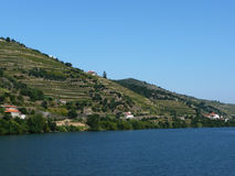 Vineyards by douro river port wine stock image