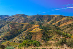 Vineyards on Douro river. Royalty Free Stock Photography