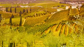 Vineyards in the Douro river valley between Peso de Regua and Pinhao, Portugal stock images