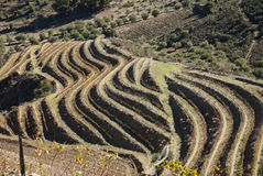 Vineyards at Douro river valley, Portugal Stock Image