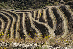 Vineyards at Douro river valley, Portugal Royalty Free Stock Photography