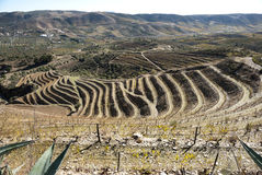Vineyards at Douro river valley, Portugal Stock Photos