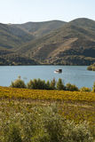 Vineyards at Douro river valley, Portugal Stock Photography