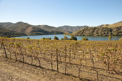 Vineyards at Douro river valley, Portugal Stock Images