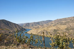 Vineyards at Douro river valley, Portugal Royalty Free Stock Image