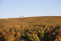 Vineyards at Douro river valley, Portugal Royalty Free Stock Images