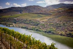 Vineyards of the Douro Valley, Portugal. Vineyards of the Douro Valley, Porto, Portugal Royalty Free Stock Image