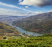 Vineyards in Douro Valley Stock Images
