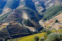 Vineyards in Douro Valley,Portugal Royalty Free Stock Images