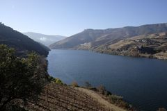 Vineyards in the douro valley stock photography