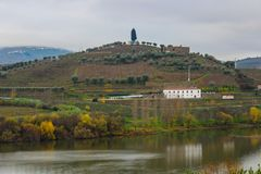 Vineyards in the Douro valley royalty free stock images