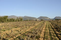 Vineyards in Drome provencal in France Royalty Free Stock Images