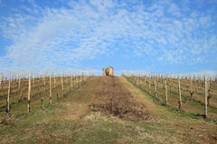 Vineyards in early spring Royalty Free Stock Image