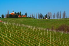 Vineyards In Spring, Slovenia Stock Images