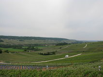 Vineyards of Eperna Stock Images