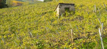 Vineyards on a farm in Getaria, Gipuzkoa Stock Photography