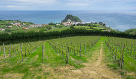 Vineyards and farm for the production of white wine Stock Photo