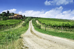 Vineyards and farm road in Italy Royalty Free Stock Photo
