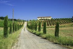 Vineyards and farm road in Italy Royalty Free Stock Image