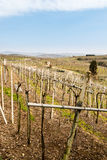 Vineyards and farmland on the hills in spring. Stock Photography