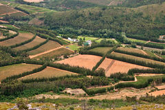 Vineyards in fertile valley. Aerial view of lush vineyards for wine making in western cape Wellington and Paarl in South Africa stock image