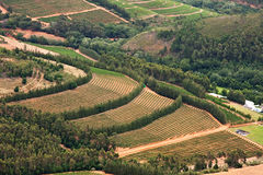 Vineyards in fertile valley Royalty Free Stock Images