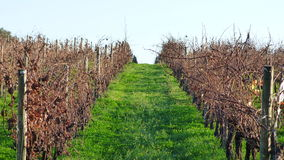 The vineyards Royalty Free Stock Photos