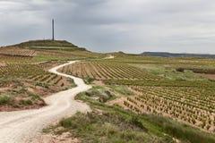 Vineyards fields in La Rioja. Along the camino de Santiago Stock Image
