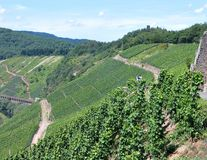 Vineyards fields in the Mosel Germany Royalty Free Stock Images