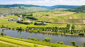 Vineyards and fields in valley of Mosel river Royalty Free Stock Images