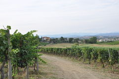 Vineyards in Florence   Tuscany  italy Royalty Free Stock Images