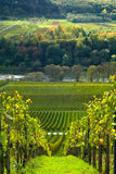 Vineyards and forest. Along the mose riverl in germany Royalty Free Stock Image