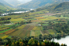 Vineyards and forest. Along the mosel river in germany Stock Photography