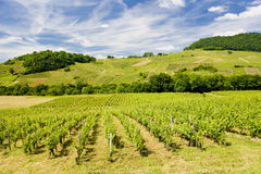Vineyards in France Stock Photos